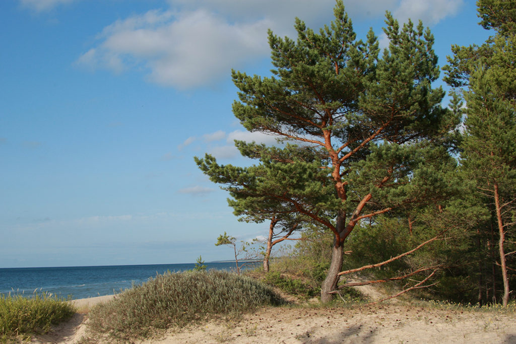 On the coast of Saaremaa